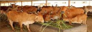Animal Husbandry of Madhya Pradesh